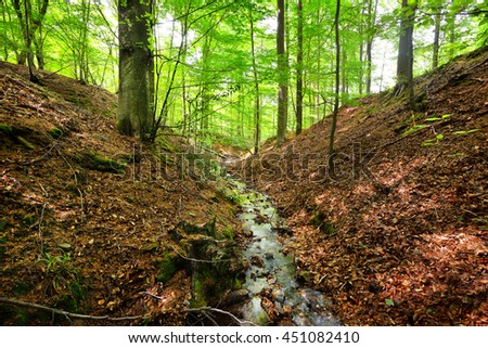 Forest spring on the hills in Belgium. - stock photo