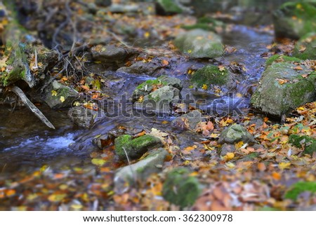 forest stream, autumn, fall - stock photo