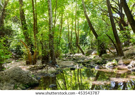 Forest stream Kziv in the north of Israel