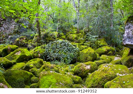 Forest Stream Near the Town of Florac, France - stock photo