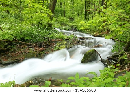 Forest stream surrounded by spring vegetation. - stock photo