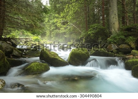 Forest stream. Tatra national park, the Carpathians.
