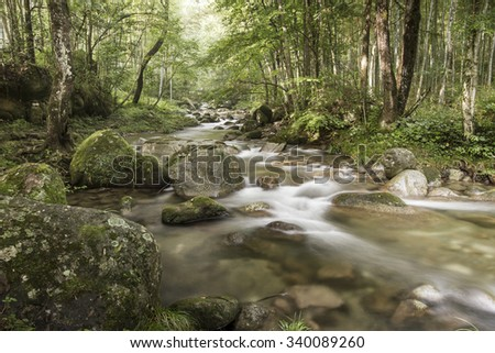 Forest streams