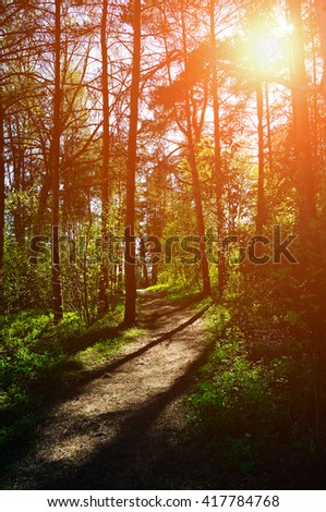 Forest sunset colored landscape - trees row and path lit by bright sunlight.  Spring colorful forest landscape.  - stock photo