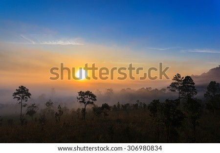 Forest sunset tree - stock photo
