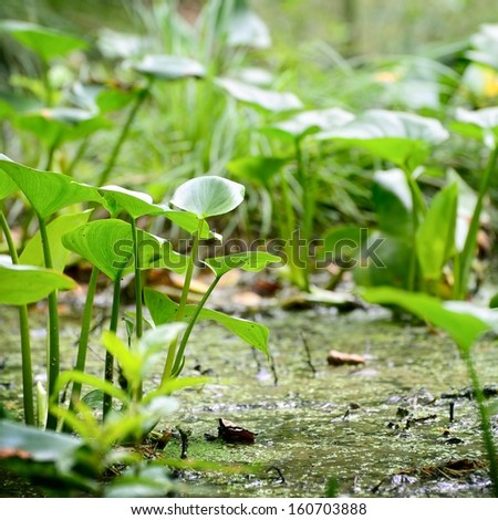 Forest swamp close-up view - stock photo