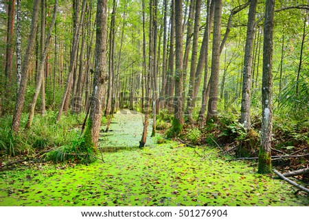Forest swamp covered with duckweed (Lemna) plants