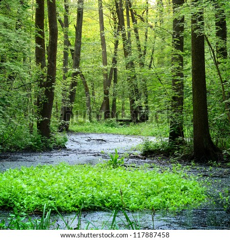 forest swamp scene - stock photo
