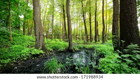 forest swamp scene - stock photo