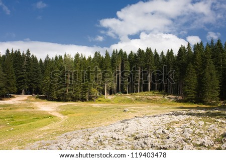 Forest the mountain - stock photo