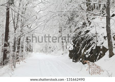Forest trail among frozen trees on a frosty January day. - stock photo