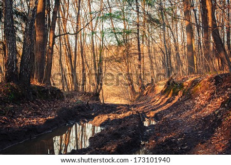 forest trail covered in puddles