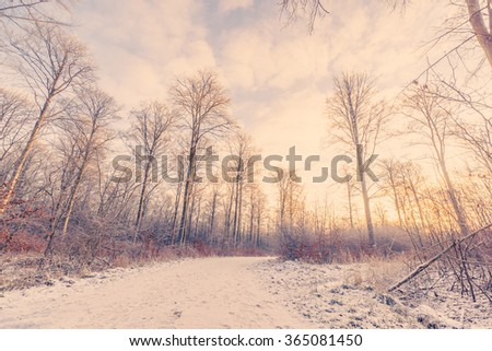 Forest trail covered with snow in the sunrise