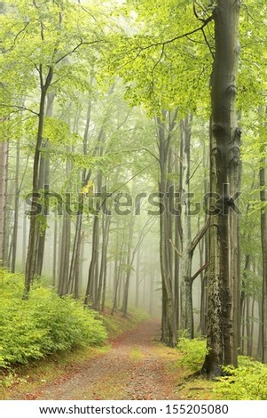 Forest trail, foggy weather in late September, Poland. - stock photo