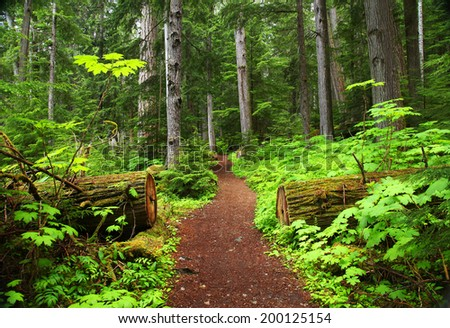 Forest trail in British Columbia - stock photo