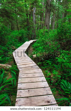 Forest trail in Rainforest on Vancouver island, British Columbia, Canada - stock photo