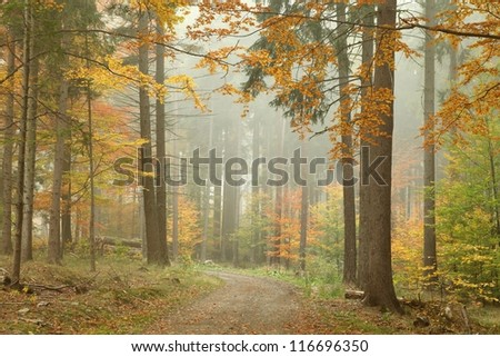 Forest trail in the mountains on a misty October's morning. - stock photo