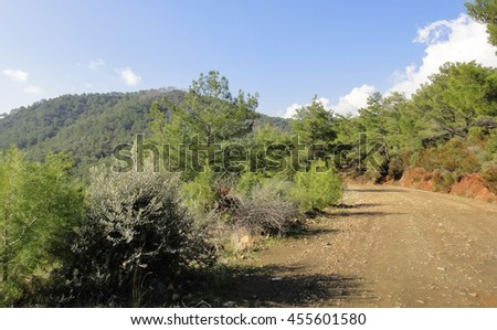 Forest trail in the south of Turkey. Asia Minor nature