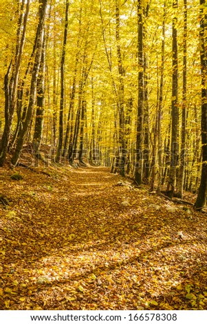 Forest trail in Voje valley in October, with yellow colored leaves