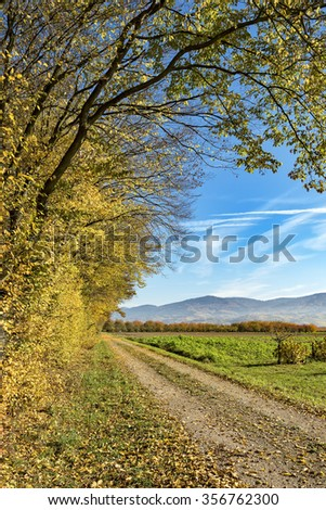 Forest trail on a sunny morning, beautiful autumn trees framing a small dirt road - stock photo