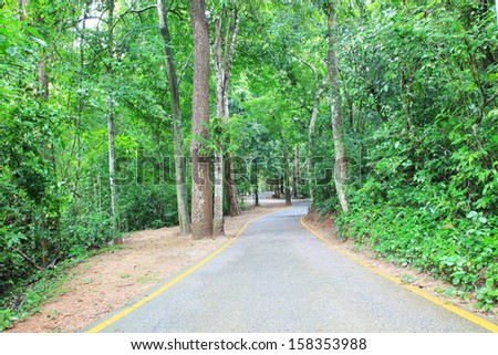 Forest trail road - stock photo