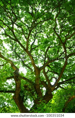 Forest tree canopy in spring, with green leaves. - stock photo
