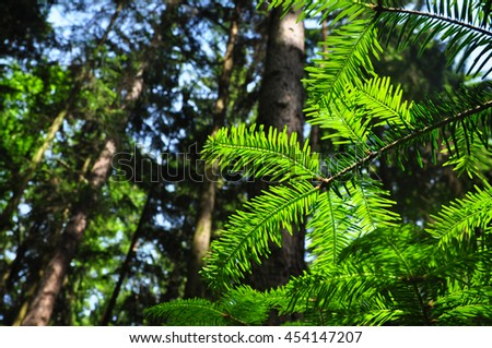 Forest tree environment ecology growth