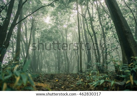 Forest Tree with sun light in rainforest.