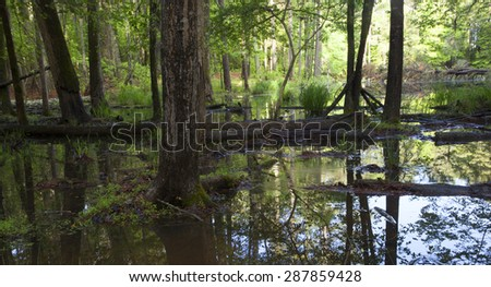 Forest treeline in ground that is under shallow water - stock photo
