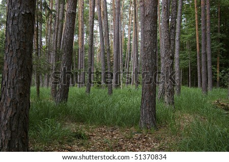 forest trees and grass