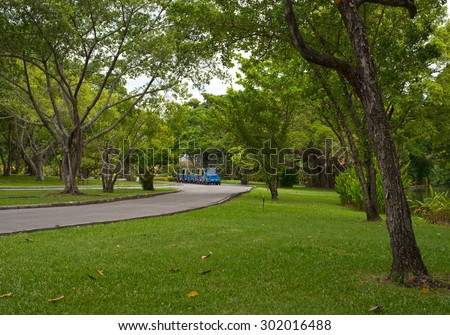 forest trees Beautiful  backgrounds - stock photo