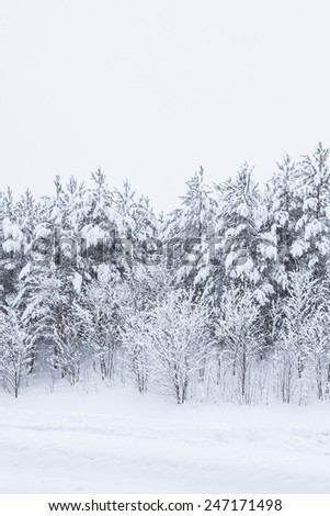 Forest trees covered in snow - stock photo