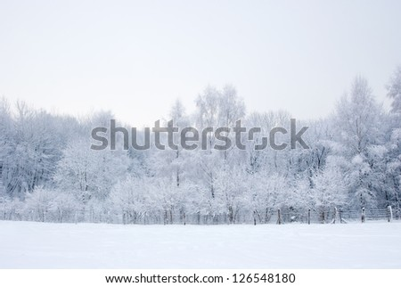 Forest trees covered in snow after snowfall in winter