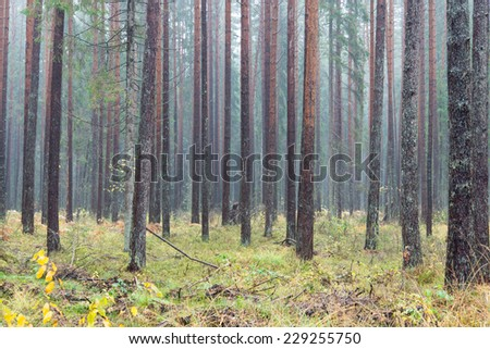 forest trees in autumn colors in countryside late autumn - stock photo