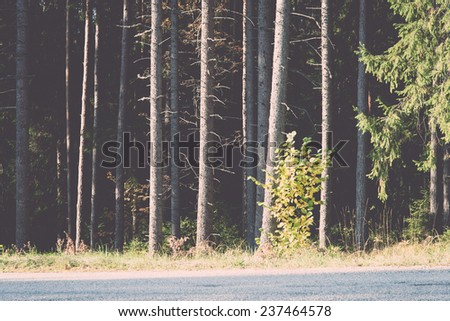 forest trees in autumn colors in countryside late autumn - retro, vintage style look - stock photo