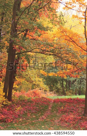 forest trees in autumn with filter effect