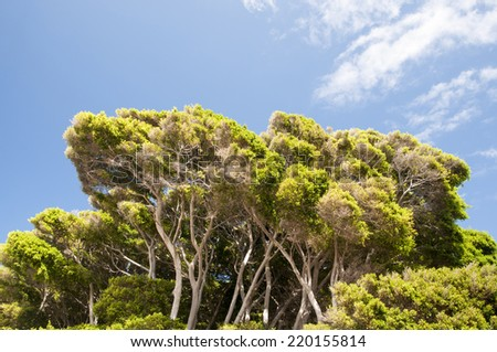 forest trees in the rainforest - stock photo