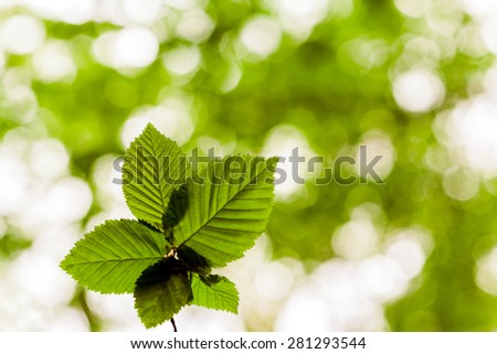 forest trees leaf. nature green wood sunlight backgrounds. spring, summer - stock photo