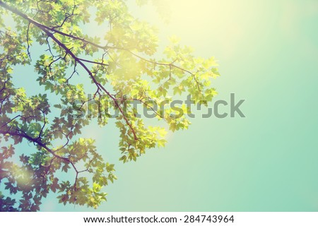 Forest trees. Nature green sunlight backgrounds. - stock photo