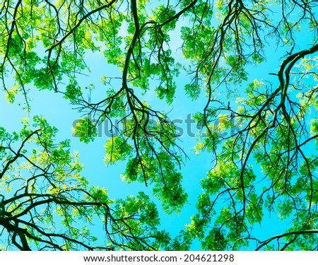 Forest trees. Nature green wood sunlight background. - stock photo