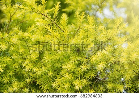 outdoor backgrounds. forest, trees, nature parks outdoor backgrounds and textures in thailand