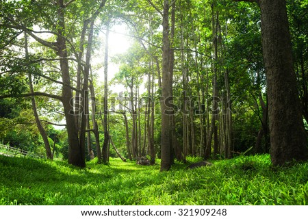 forest trees renewable energy installer.forest thailand - stock photo