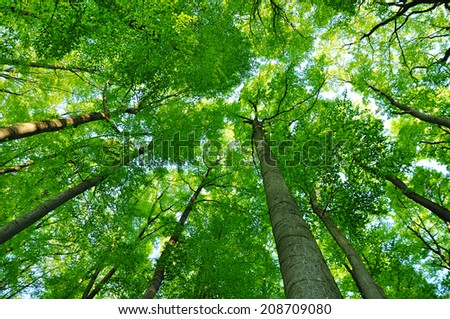 Forest trees, spring background - stock photo
