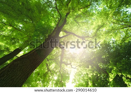 Forest trees. Sun and leaves - stock photo