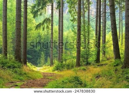 forest , unfocused - stock photo