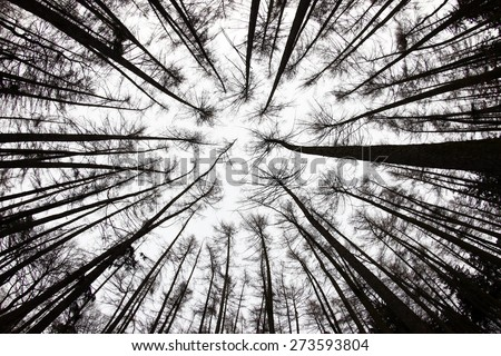 forest view from below - fish-eye lens view - stock photo