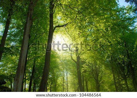 Forest Walk with bright sunlight shining through trees - stock photo