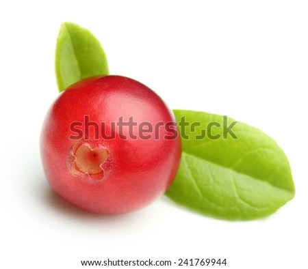Forest wild berry cowberry with leaves isolated. - stock photo