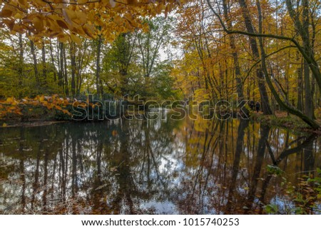 forest with a lake in fall