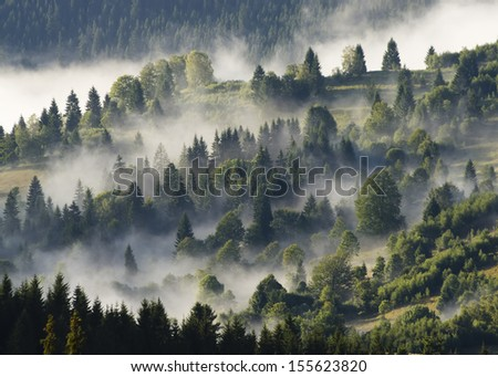 forest with clouds and fog - stock photo